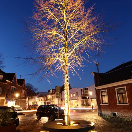 tree with bench and ambience light Bureau Stoep